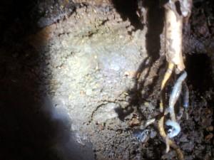 sarang rayap 2 300x225 - Rayap Bersarang di Dalam Dinding Rumah