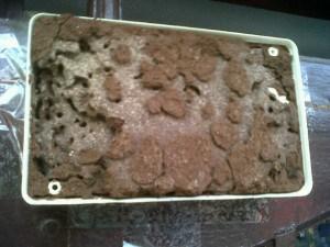 Umpan tisu yang habis dimakan rayap. Rayap tidak mati di dlam kotak, tapi mati di sarangnya..