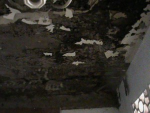 Sarang Rayap di plafon 300x225 - Gallery