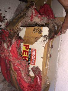 obat rayap tisu berhasil dimakan rayap 225x300 - Keampuhan Anti Rayap Tisu SPEKTA  Dan Ulasannya