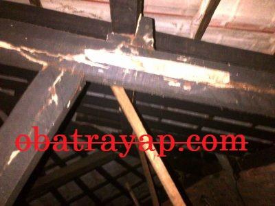 rayap makan kayu di plafon - rayap makan kayu di plafon